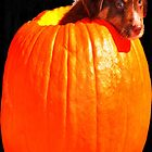 Puppy in a Pumpkin! by Kristen O'Brian