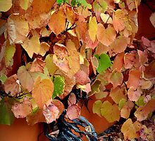 Autumn Vine by Colin Metcalf