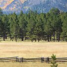 Flagstaff Field by Bryan  Keil