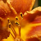 Orange flower petals macro by 60nine