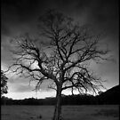 Black and White Tree by kcy011