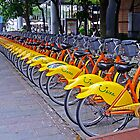 30 Yellow Bicycles in Taipei by TonyCrehan