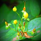 Yellow Berries by Jason Christopher