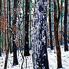 &#x27;Woods in Snow&#x27; by Jerry Kirk