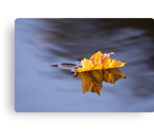 Autumn Leaf Floating On Silky Water Canvas Print