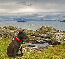 Speed Bonnie Terrier.. by VoluntaryRanger