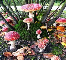 A Fairy Ring with Mushrooms by ienemien
