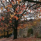 Autumn leaves in Beechworth by Greta van der Rol