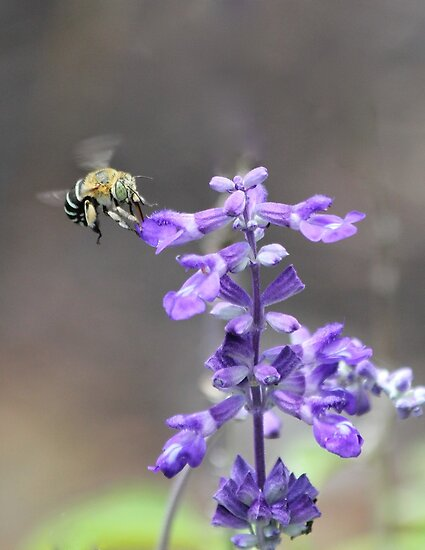 Just buzzing around by Greta van der Rol