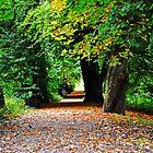 Autumn  by bobbykim666