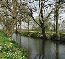 River and Trees in Springtime by Sue Robinson