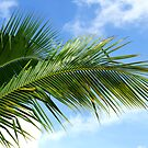 Palm Tree Leaves by BlinkImages