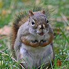 This is my nut by Heather King
