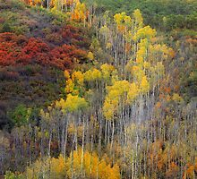 Avalanche of Color by Steve  Taylor