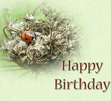 Happy Birthday Greeting Card - Ladybug on Dried Queen Anne's Lace by MotherNature