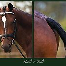 Head or Tail by Odille Esmonde-Morgan