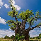 The Big Baobab by Adrian Park