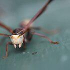 Arizona Wasp by Jazzy724