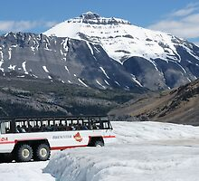 Athabascar Glacier Tour by roger smith