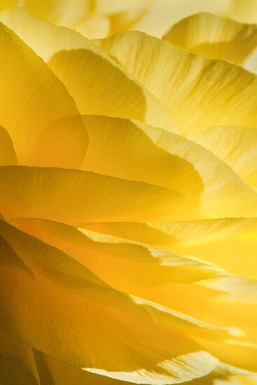 Petal layers by nadine henley