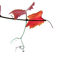 vine calligraphy by nadine henley