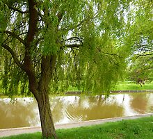 Willow tree by Antoinette B