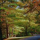 Fall in Hickory Run State Park by Debra Fedchin