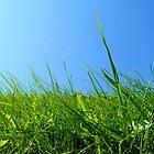 Grass by K. Abraham