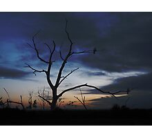 Two Wood Pigeons Watching The Sunrise Photographic Print