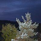 """Dew """"Smitten"""" Tree by Jimmy Deas"""