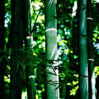 Bamboo Forest by jdshock