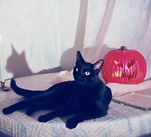 The Black Cat by brettisagirl