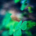 wood sorrel by netza