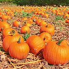 Pumpkin Plot ! by Colin J Williams Photography