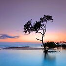 Garry&#x27;s Tree - Wellington Point Qld Australia by Beth  Wode