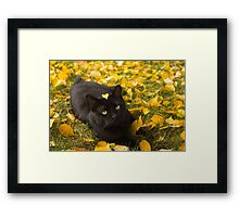 Cat Under Autumn Birch Framed Print