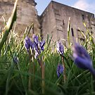 Bluebells around Cliffords Tower York by sweetairhead