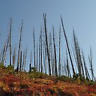 Towering Sticks by CADavis