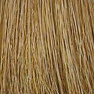 Macro of a broom. by Penny Rinker