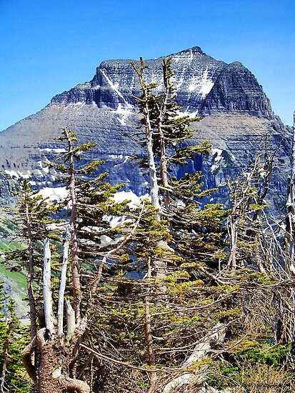 Windblown (Glacier National Park) by rocamiadesign