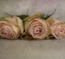 La vie en rose by lucyliu