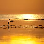 Blue Heron, Golden Hour by scullyb
