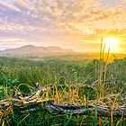 Sweet Kiss of the Sun - Byron Bay by Cheryl Styles