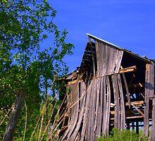 Wood under stress... by Larry Llewellyn