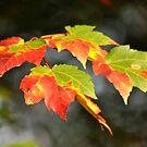 Slowly Becoming Autumn by savvysisstudio