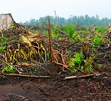 Is Bio Fuels a green option?  by Orangutans