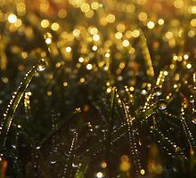 Morning Dew by Paul Leslie
