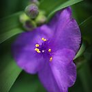 Pretty in Purple by Ami  Wilber-Mosher