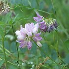 Vetch by Alex Call