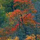AUTUMN TREES BELOW THE CHIMNEYS by Chuck Wickham